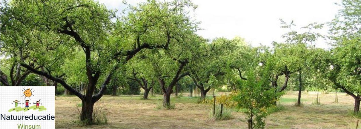 Natuur- en Milieu Educatie Winsum